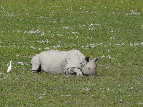 rhino small